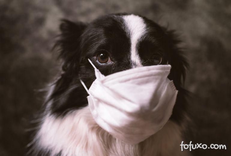 Saiba o que fazer para proteger os cães da Covid-19