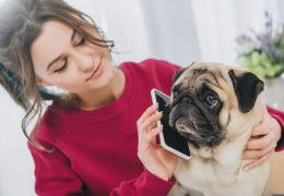 4 aplicativos que ajudam a cuidar do seu cachorro