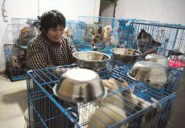 Aposentada Chinesa vive com 1.300 cães na sua casa