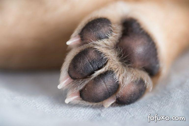 Pata inchada: 3 possíveis motivos para este problema no seu cão
