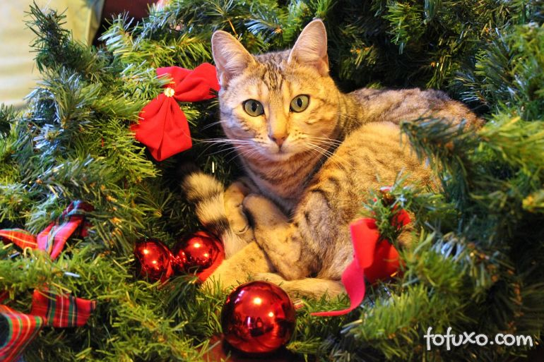 Dicas para deixar o seu gato tranquilo neste natal