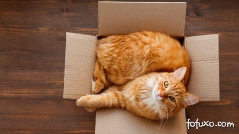 Gatos e caixas de papelão: entenda essa relação de amor.