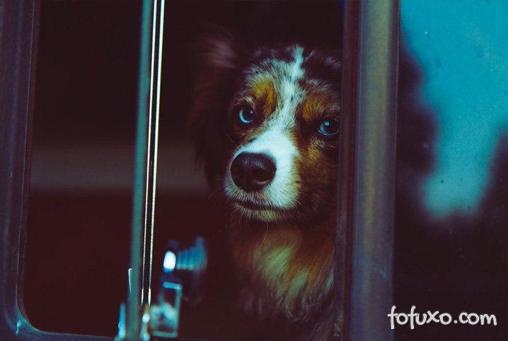 Saiba como viajar com cães em ônibus rodoviários
