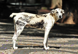 """Cachorro """"tatuado"""" gera advertência para proprietários"""