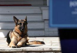"""Cachorro de Joe Biden será empossado como """"primeiro-cão"""" dos EUA"""