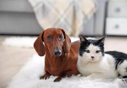 Aumenta demanda por cães e gatos na Alemanha durante a pandemia
