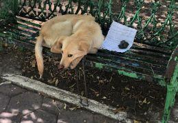 Criança abandona cachorro maltratado por pais e deixa bilhete