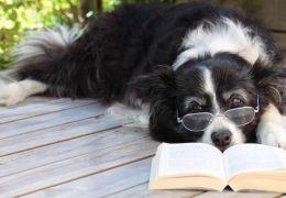 Estudo divulga teste caseiro para saber se cão é um gênio