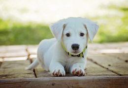Sonhar com cão é bom? Confira os significados possíveis!