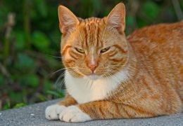 Confira algumas coisas que os gatos odeiam nos humanos