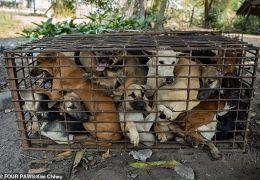 Cães são resgatados de jaulas no Camboja