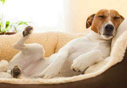 Cachorro com gases? 4 dicas para resolver o problema