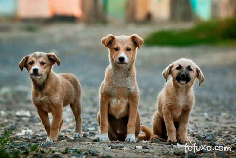 5 dicas para resgatar cães abandonados