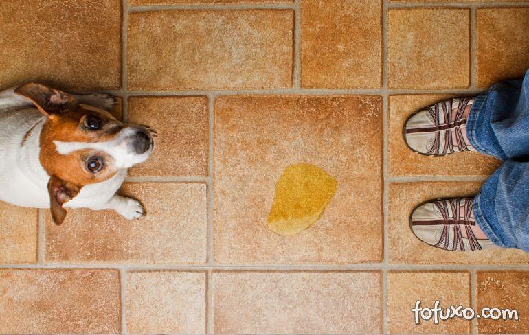 O que é melhor para o cão? Tapete higiênico ou jornal?