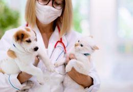 Vale a pena fazer plano de saúde para cachorro?