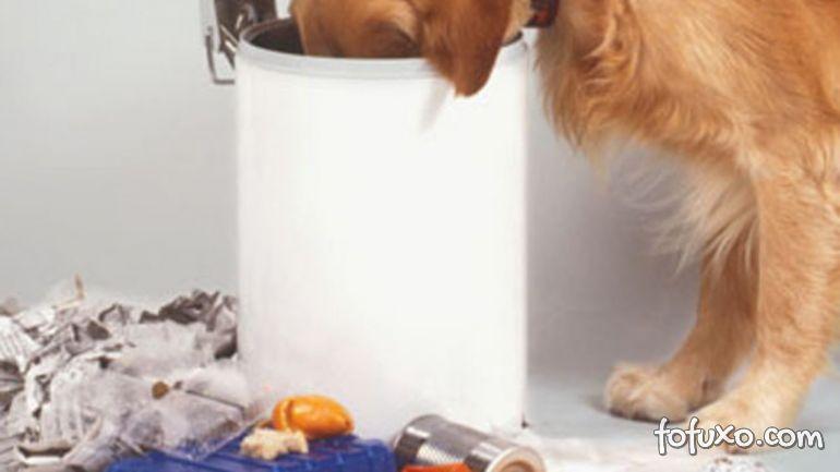 3 dicas para ensinar o cachorro a não mexer no lixo