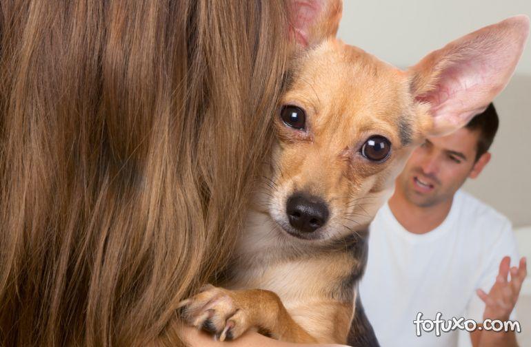 Mulher ganha na Justiça direito de visitar cachorro que mora com ex-marido