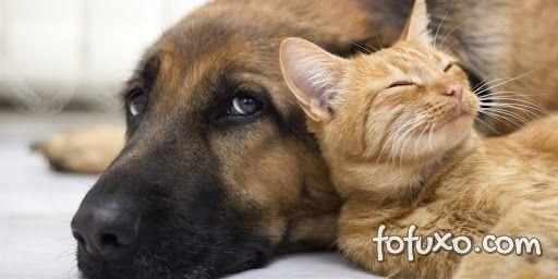 4 raças de cães que convivem bem com gatos