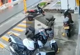 Cachorro rouba osso gigante de pet shop