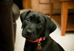 Coleiras: confira os modelos ideias para o seu cachorro