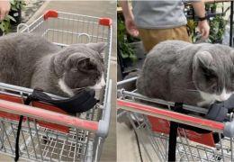 Gato adormece dentro de carrinho e impede cliente de ir embora