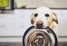 4 Nutrientes fundamentais para a saúde dos cachorros