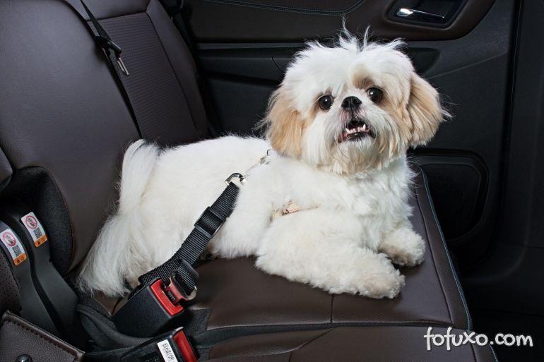 Dicas para usar corretamente o cinto de segurança em seu cachorro