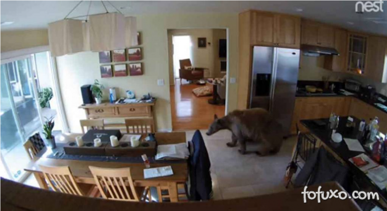 Cães expulsam urso que invade casa nos EUA