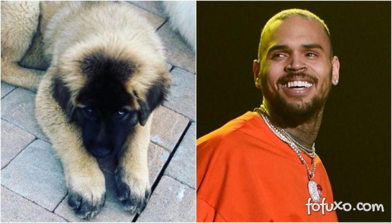 Chris Brown é processado por ataque de cachorro