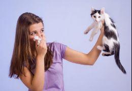 Ração para gatos promete resolver problemas de alergias em humanos