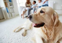 Cachorro dentro de apartamento: Confira dicas para manter a casa limpa