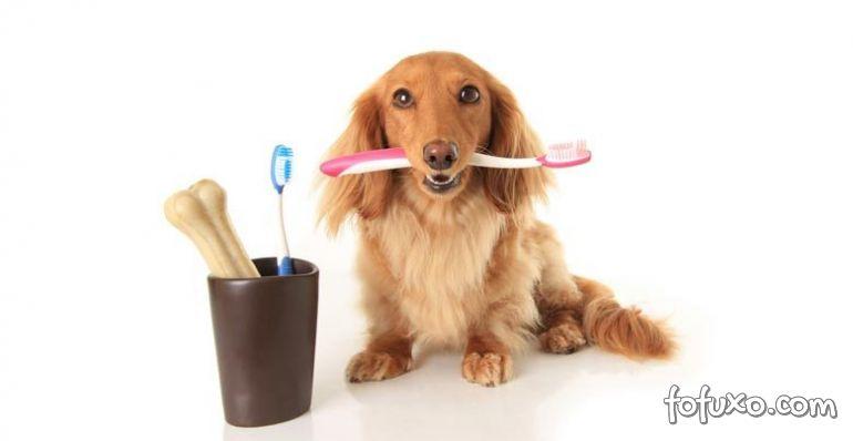 Escovar os dentes dos cães é realmente necessário? Entenda!