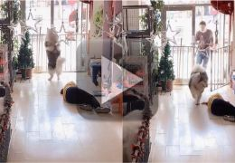 Cachorro pede socorro depois de ver atendente de pet shop desmaiar