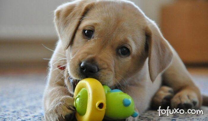 5 coisas que não podem faltar na casa de quem tem filhotes de cachorro