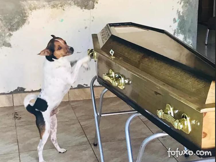 Cachorro emociona pessoas ao chorar e ficar ao lado do caixão da dona