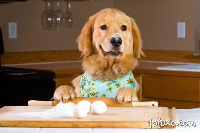 Cachorro pode comer ovo? Saiba se o alimento faz bem ou não ao pet!