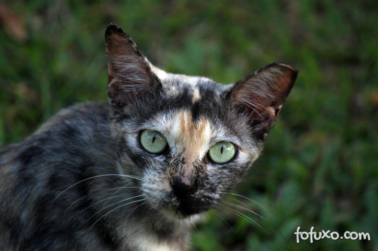 4 benefícios da castração felina