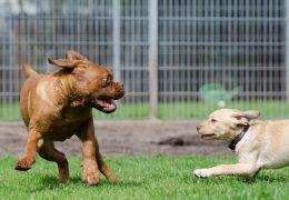 Estudo afirma que cães pequenos são mais agressivos que os grandes