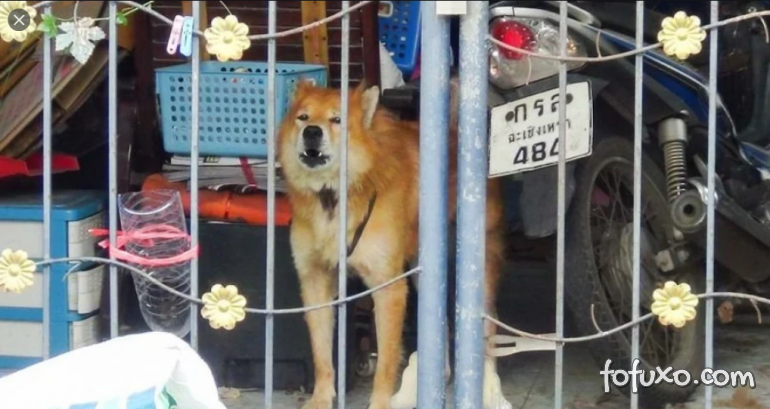 Cachorro comove ao esperar dono que morreu de Covid-19