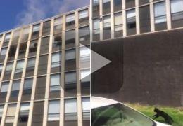 Vídeo: gato pula de apartamento em chamas no quinto andar e sai andando.