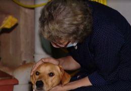 Mulher viaja mais de 1.300 km para reencontrar cachorro