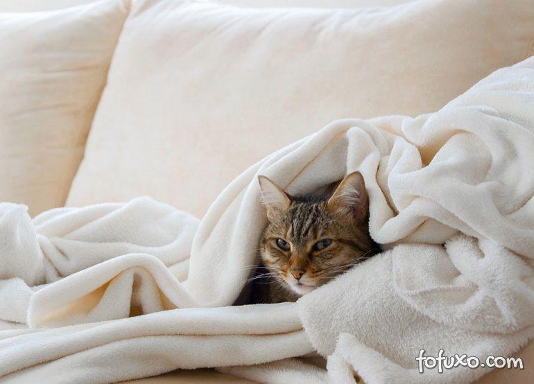 5 dicas para cuidar do seu gato no inverno