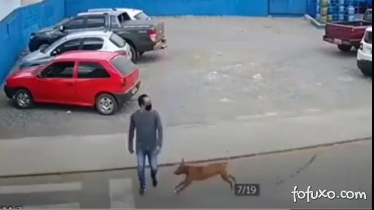 Cachorro caramelo atropela homem na faixa de pedestres