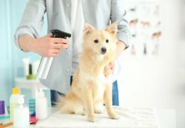 Dicas para dar banho seco em cães e gatos