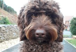 Cão terapêutico impede suicídio de mulher