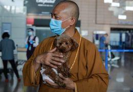 Monge chinês resgata mais de 8 mil cachorros das ruas