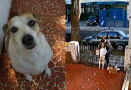 Homem rouba roupinha de cadela que estava no pátio