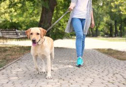 Caminhando com o cão: confira um plano para se exercitar junto com seu amigo