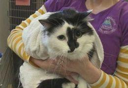 Conheça a história do gato Lux, que se tornou notícia por surto agressivo