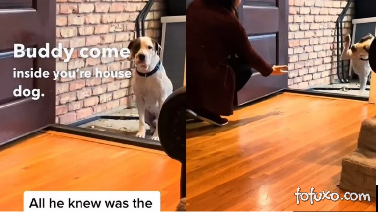 Cachorro se emociona ao entrar dentro de uma casa pela primeira vez